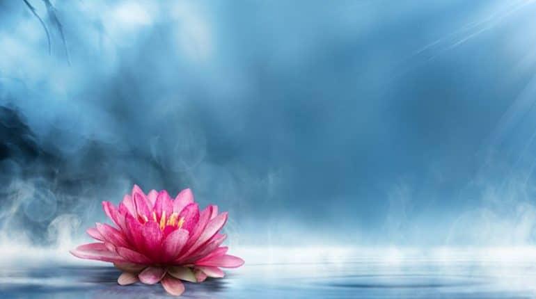 soul lotus - maria